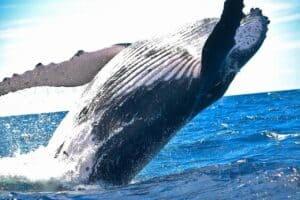 Whale Movements